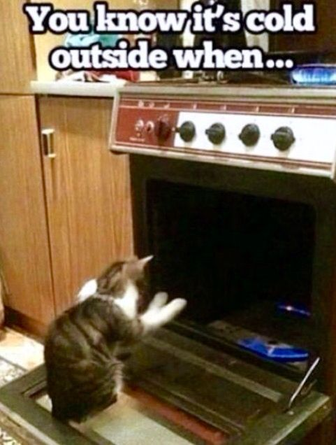 Yep You Know It S Cold Outside When You See Your Cat