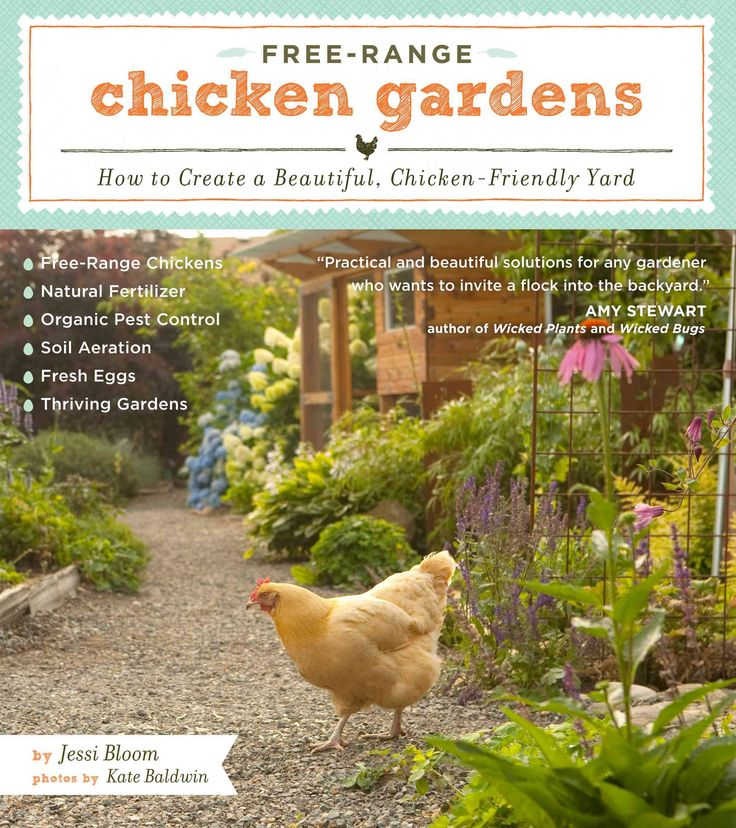 Many gardeners fear chickens will peck away at their landscape, and chicken lovers often shy away from gardening for the same reason. But you can keep chickens and have a beautiful garden, too! Fresh
