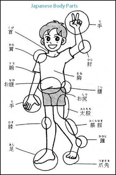 60 Japanese Body Parts Vocabulary Words