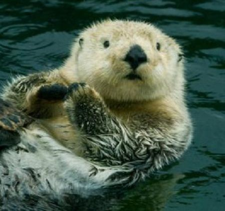 Hungry Sea Otters Fight Climate Change | The Beacon: Oceana's Blog