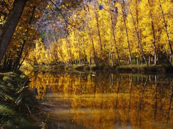 Un bosque de hayas en la provincia de Vizcaya.  Se acaba el verano, pero no llores: las lágrimas no te dejarán ver los colores del bosque (y se te correrá el rímel).