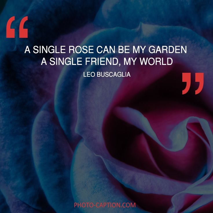 ''A single rose can be my garden, a single friend, my world.'' Leo Buscaglia. Check out the link in the bio for more best friend captions #friendship #bestfriend #love #BOYFRIEND #happy #friend #best #bestie #quotegram #quoteoftheday #photocaption #quote #quotes #quotegram #quoteoftheday #caption #captions #photocaption #FF #instafollow #l4l #tagforlikes #followback