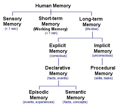 TYPES OF MEMORY Shows where the working memory fits into the other types of memory systems.