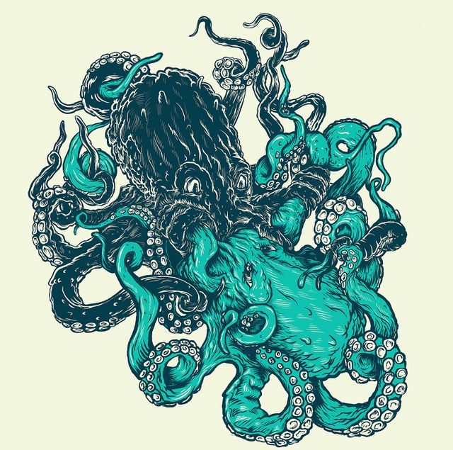 45 best Octopus images on Pinterest Octopuses Octopus art and