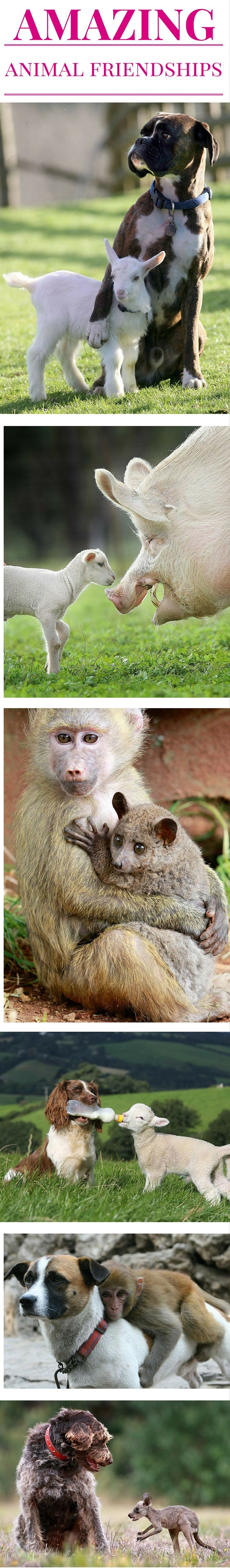 These orphaned animals found unlikely friends to adopt them.