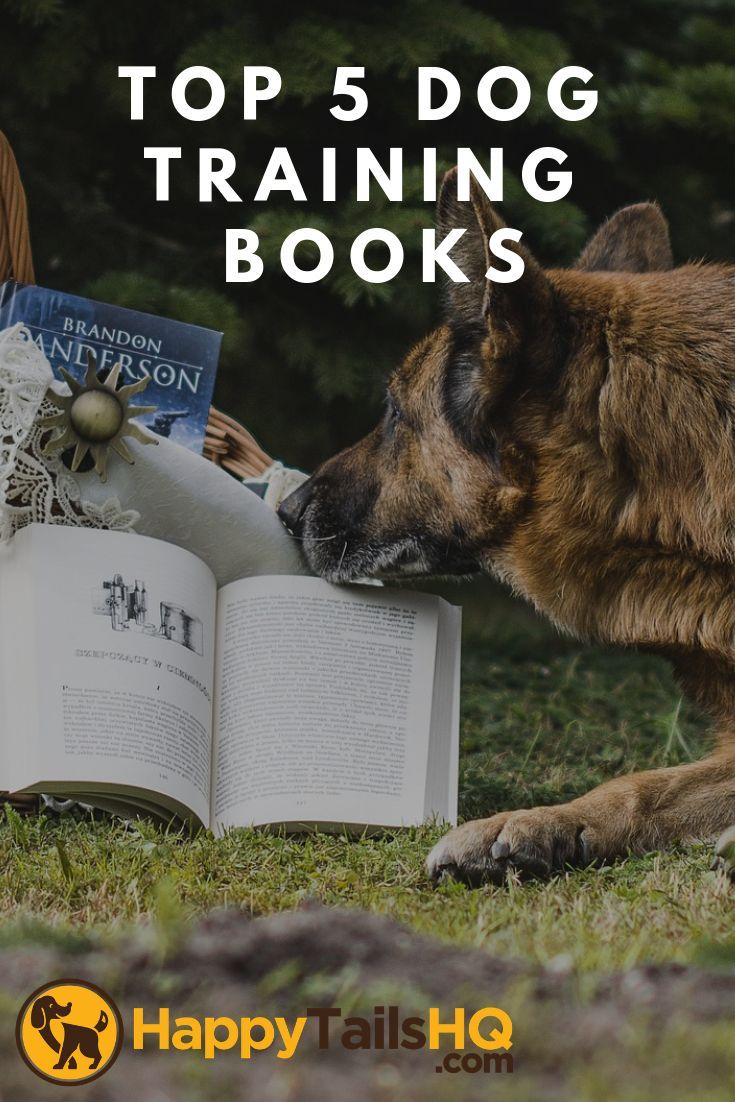 Want To Train Your Dog Our Top Picked Books On Training Your Dog