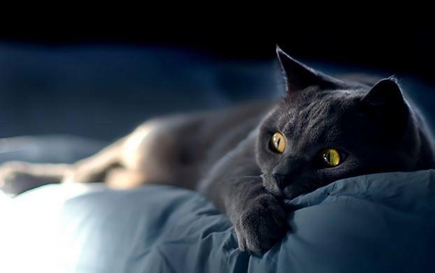 Кошка в доме - к радости