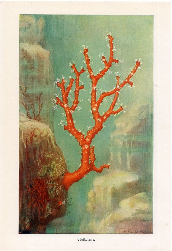 1869 red coral branch original rare antique by antiqueprintstore