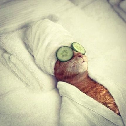 Cat lounging in bathrobe with cucumbers on eyes and towel on head