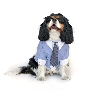 Going to the office with Mommy :) Dress Your Dog In Dapper Duds