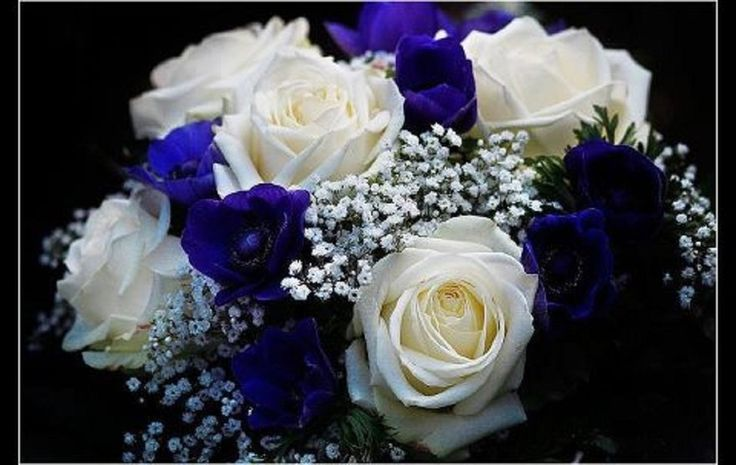 bouquet de rose bleu et blanc Wallpaper
