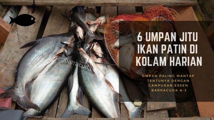 Pin Oleh Destykurniawati Di Barracuda Ikan Hujan Essen