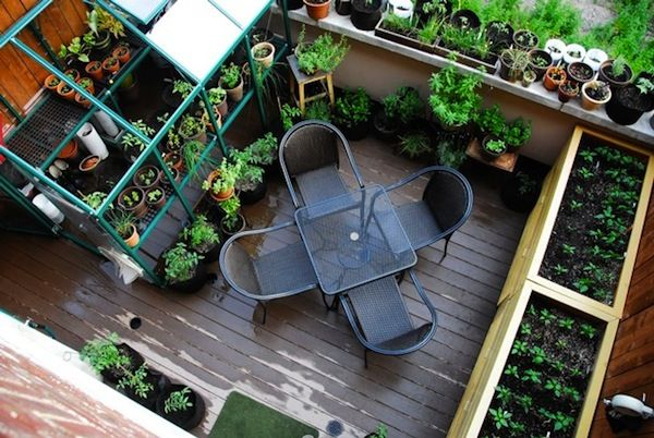 Raised bed on roof terrace