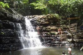 Taman Negara - Rainforest