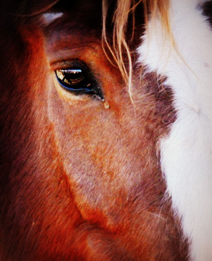 I love a good horse.  White Stallion Ranch just outside of Tucson, AZ from Feb. of 2013.