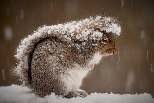 Ein praktischer Schnee-Unterstand so ein Eichhörnchen-Schwanz – Jutta Thömmes