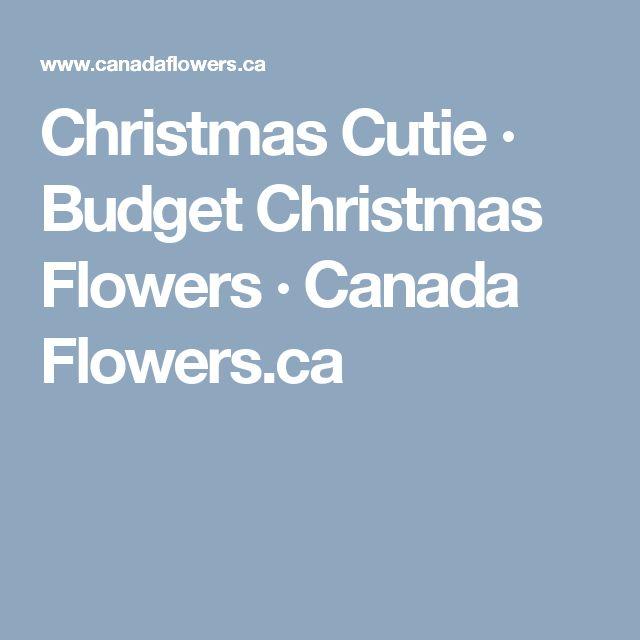 Christmas Cutie · Budget Christmas Flowers · Canada Flowers.ca