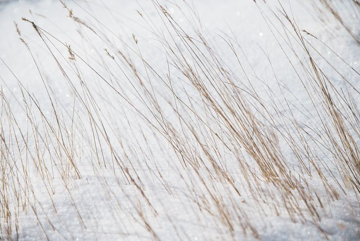 Photo Essay: Solitude and Camaraderie on a South Dakota Pheasant Hunt - Gear Patrol