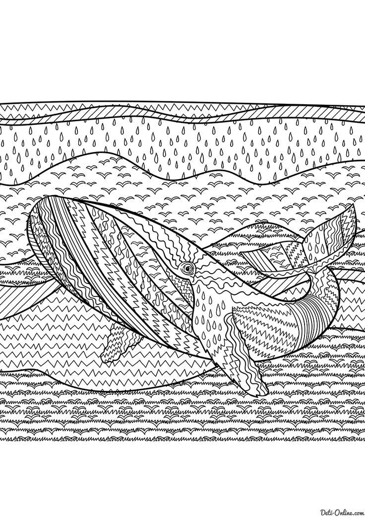 Раскраска Горбатый кит