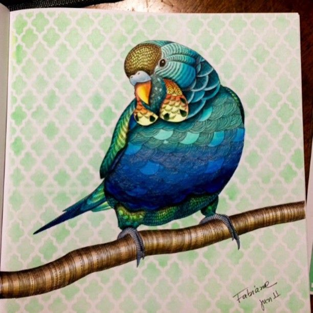 Animalkingdon Colouring Colouringbook Adult ColoringColoring BooksCraft ArtBook ArtAnimal KingdomBirdParakeetsParrotsJoanna Basford