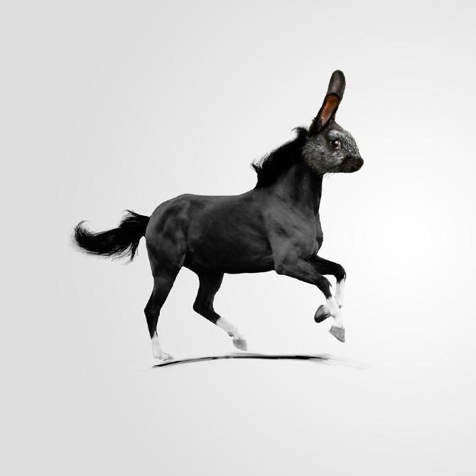 Bunny-horse