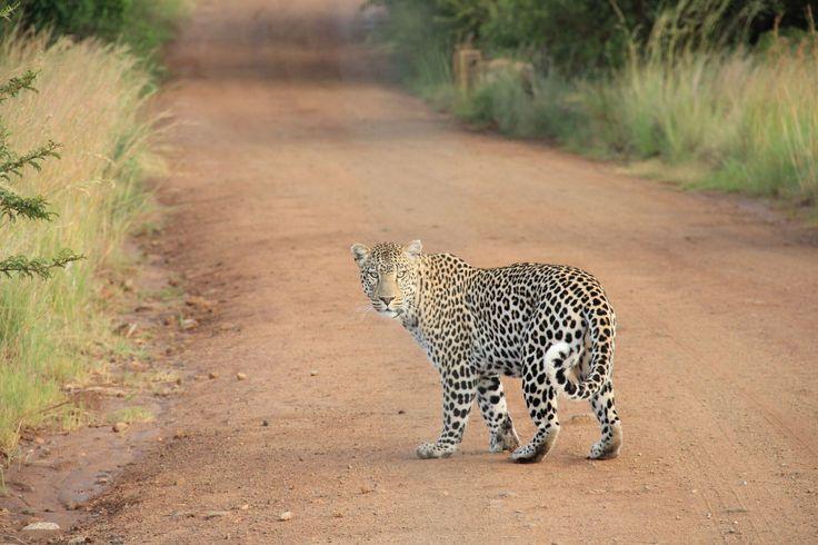 From my safari adventure!