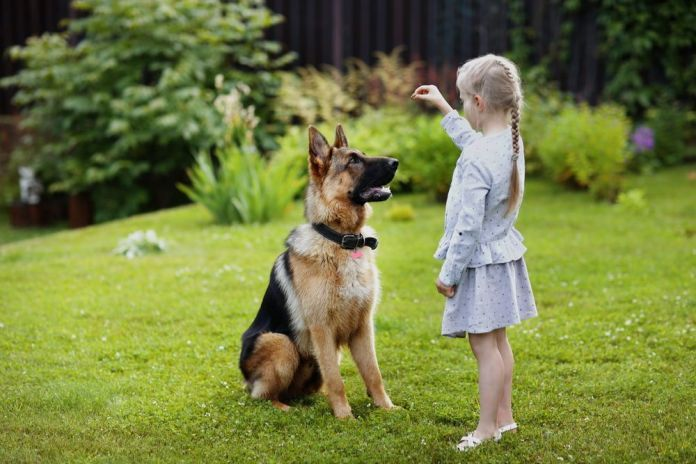 Toddler Girl Training The Dog German Shepherd Training Dog