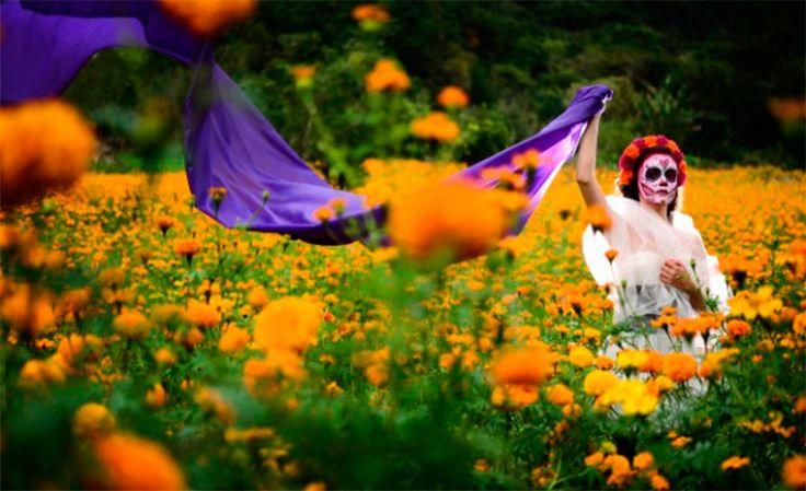 #¿Por qué China produce el 75% de la flor del Día de Muertos? - La Tribuna.hn: La Tribuna.hn ¿Por qué China produce el 75% de la flor del…