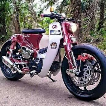 best Honda Cub in the world?