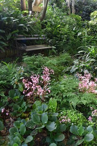 Garden and Home   Gardening Gallery