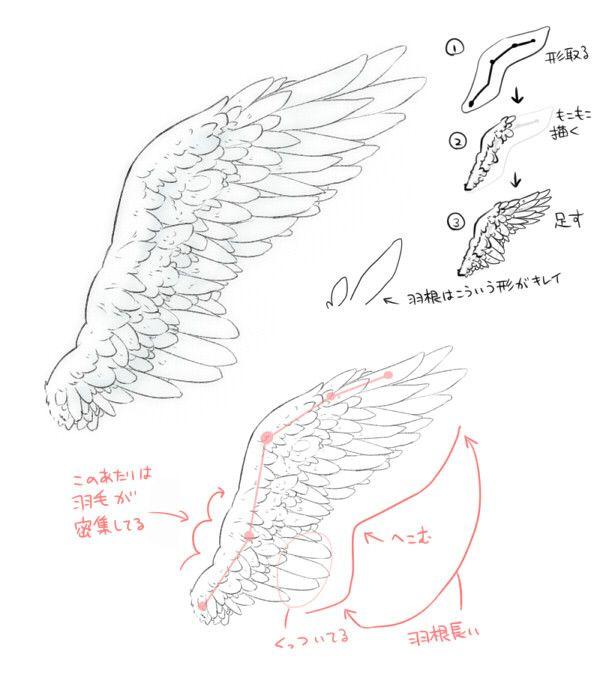 【翼回答】こういう羽でしたら、各部を意識するといいと思います。口では難しいので画像で…参考になれば。