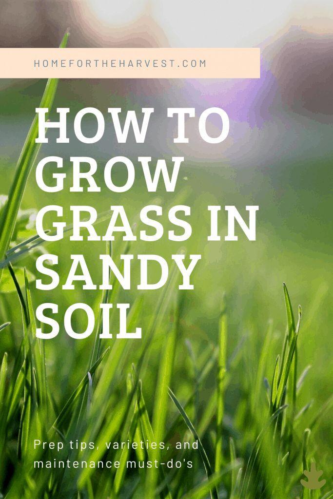 How To Grow Grass In Sandy Soil In 2020 Growing Grass Sandy Soil Lawn Soil
