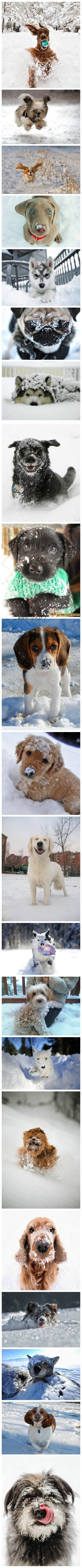 cute dogs with snow~