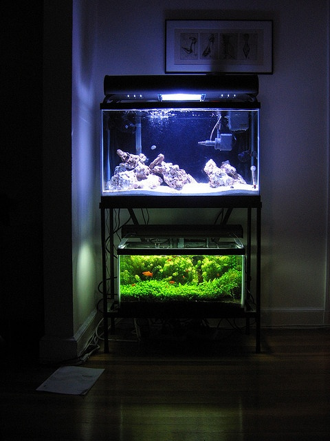 116 best images about modern design aquariums on pinterest saltwater fish tanks fish tanks. Black Bedroom Furniture Sets. Home Design Ideas