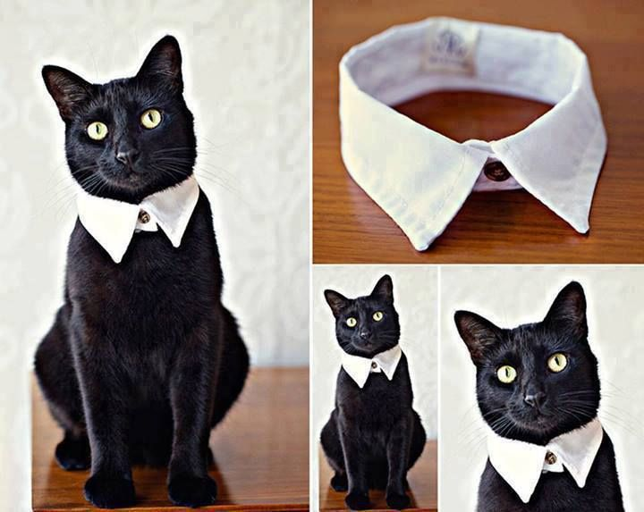 How to DIY Easy and Classy Cat Collar from Old Shirt.  Think I would put a piece of elastic in the back to make it safer. All you'd need to do would be to cut the collar at the back and insert white elastic under the collar. It wouldn't even have to show.
