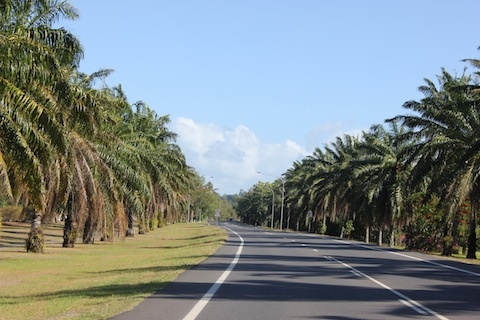 Palm lined street entering Port Douglas