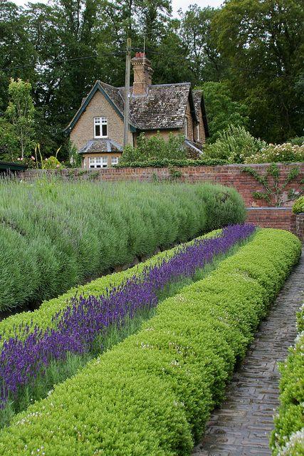 Lavender Garden -     Blenheim Palace, Woodstock, Oxfordshire