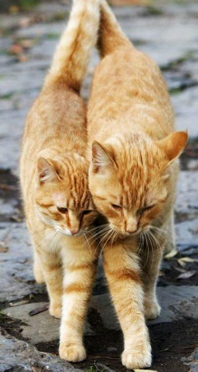 ~ togetherness ~