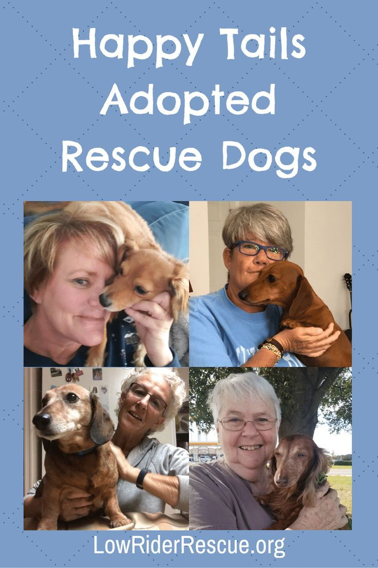 Happy Tails Low Rider Dachshund Rescue of Florida