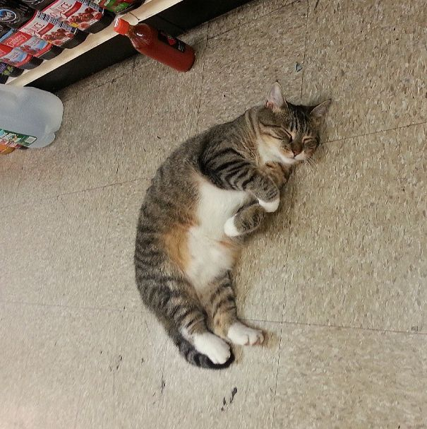 Bodega cat asleep in the middle of the floor. Aww tabbies...