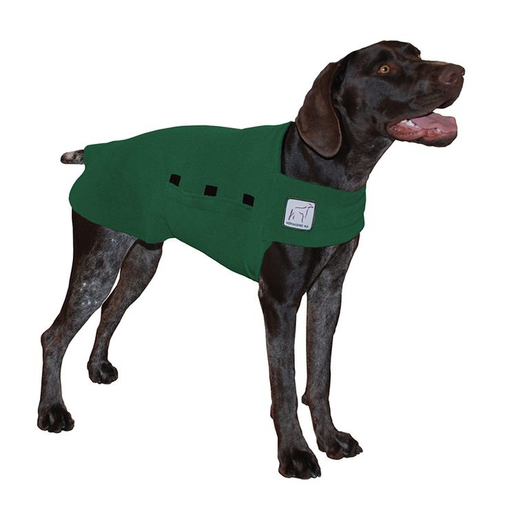 Green German Shorthaired Pointer GSP Dog Tummy Warmer, great for warmth, anxiety and laying with our dog rain coat. High performance material. Made in the USA.