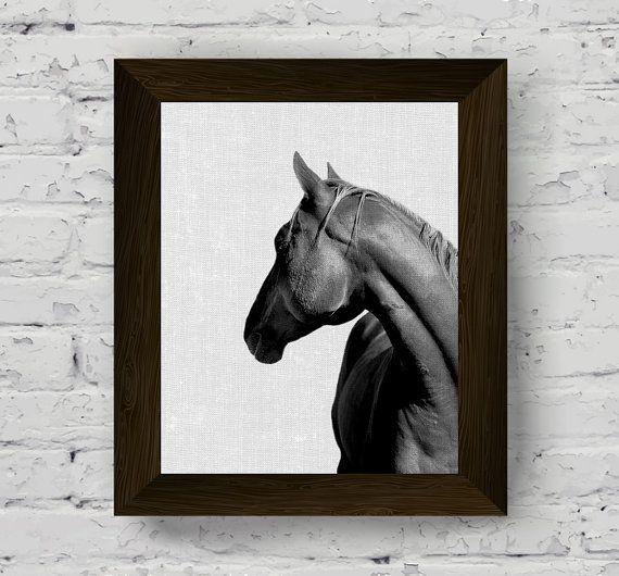 Foto bianco e nero cavallo cavallo fotografia stampa animale