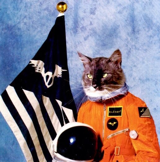 17 Best images about CLASSY CATS on Pinterest | Astronauts ...