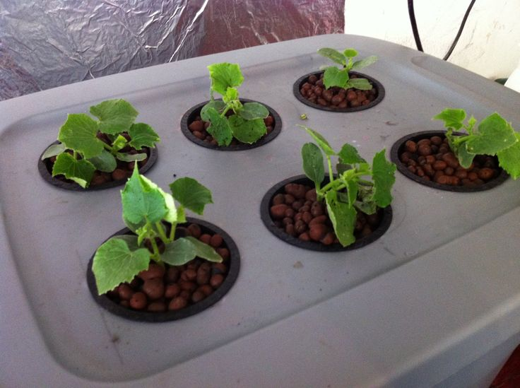 Homemade Deep Water Hydroponic System for $35 Easy!