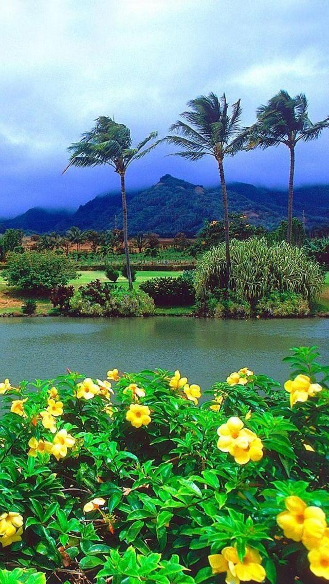 Maui island, Hawaii
