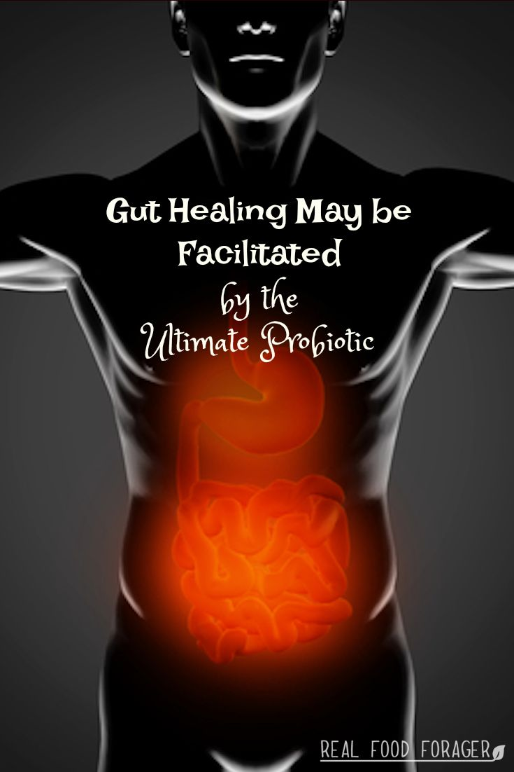 Gut Healing May be Facilitated by the Ultimate Probiotic. Autoimmune issues may need some form of natural therapy to compliment any diet change. Gut healing may be facilitated by the ultimate probiotic!