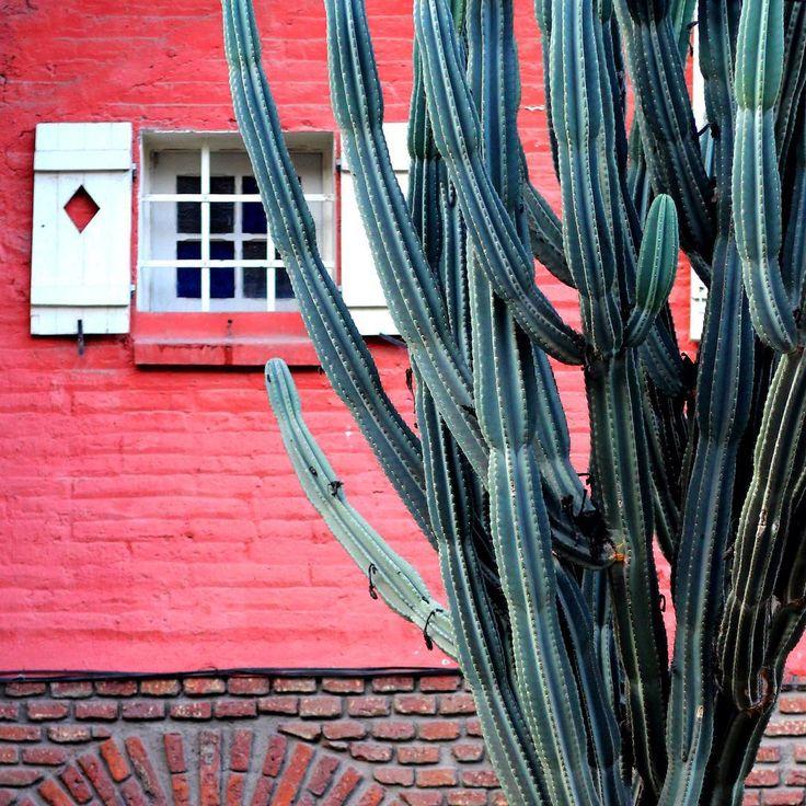 Wall decoration ideas cactus Santiago de chile by La ciudad al instante#santiago #laciudadalinstante #chile #cactus #fachada #facade #facadelovers #providencia #instastgo #instachile #instagrammers #instagood #instamood #windows #rsa_windows #scl #santiagoadicto #streetphotostgo #thisischile #enterrenochile #santiagodechile #stgo #stgoalinstante La ciudad al instante