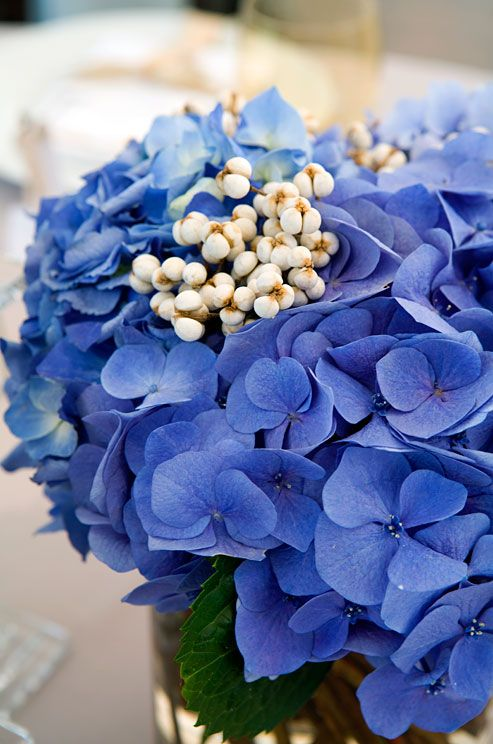 Blue hydrangeas look rich and full when packed tightly into a vase.