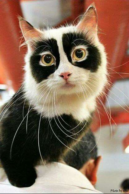 I think this is a photoshopped image. The markings are not only very unnatural, but there is no other picture of this cat. Usually you could find the original, unretoched image, but there is no sign of it around. If there is an other picture of the cat or the original picture, please show it to me.