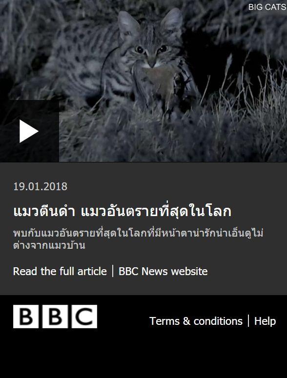 แมวต นดำ แมวอ นตรายท ส ดในโลก